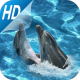 Cute dolphin Live Wallpapers