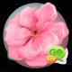 Cherry Blossom GO SMS