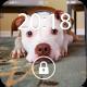 Fancy Screen Lock Dog Face