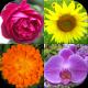 Flowers Quiz: Beautiful Plants
