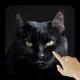 Black Kitty Cat Live Wallpaper